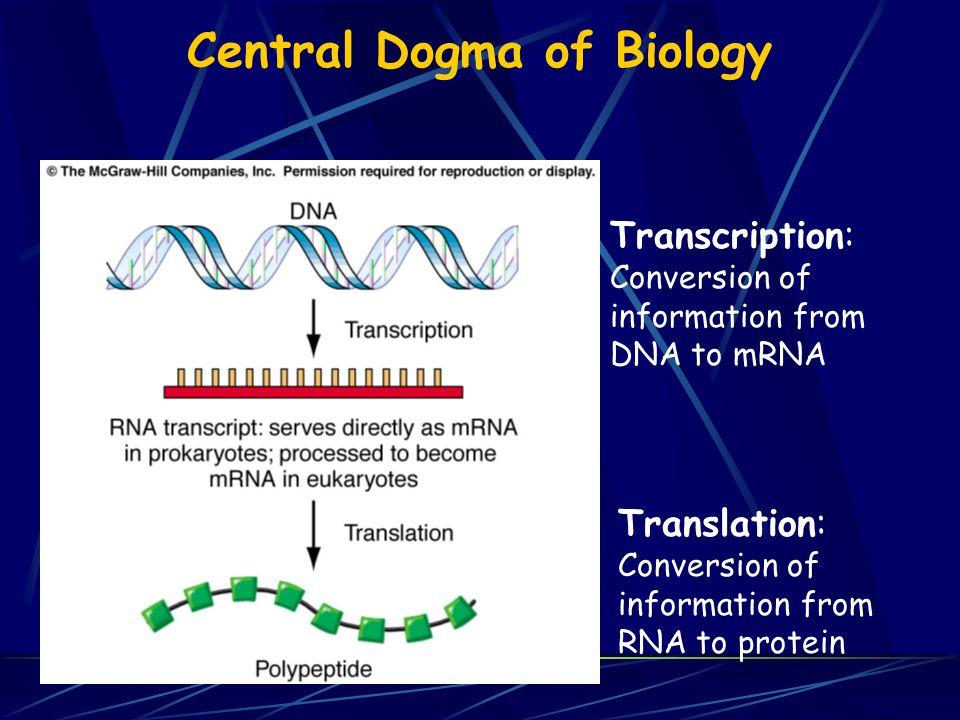 Electrophoresis of DNA Gels are made of agarose or polyacrylamide DNA samples loaded, voltage applied Negatively charged DNA migrates toward + electrode Smaller DNA fragments migrate faster
