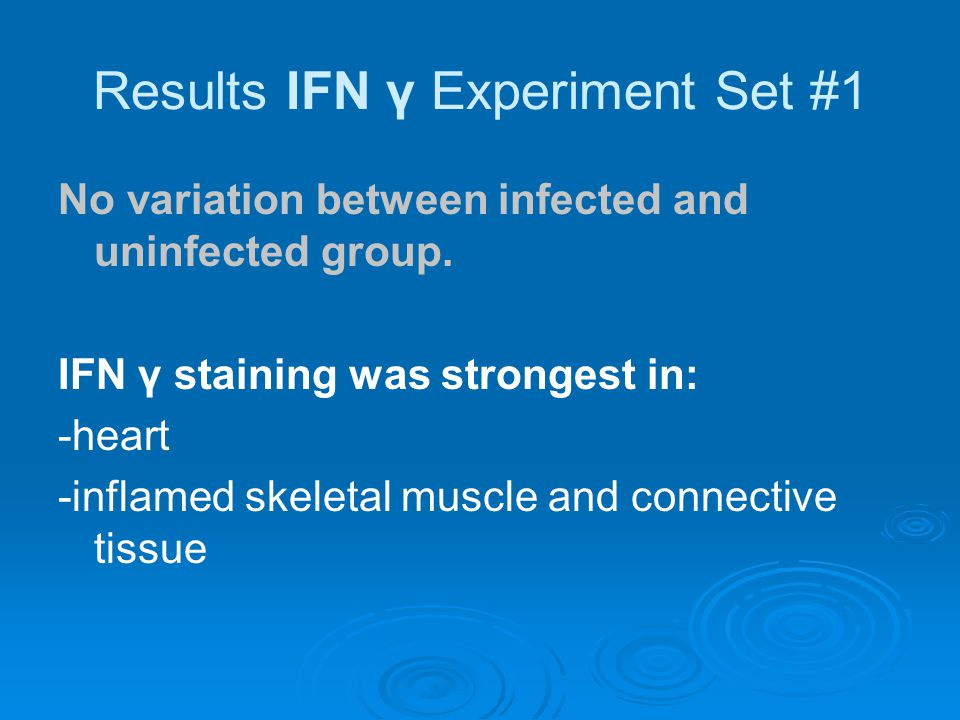 Results IFN γ Experiment Set #1 No variation between infected and uninfected group.