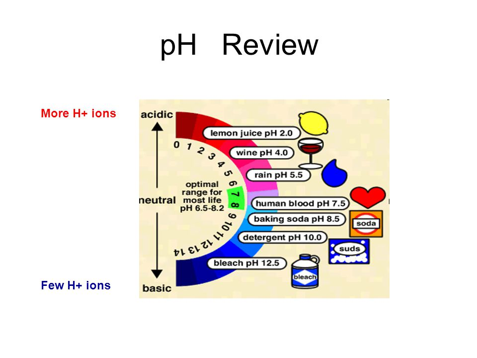 More H+ ions Few H+ ions pH Review