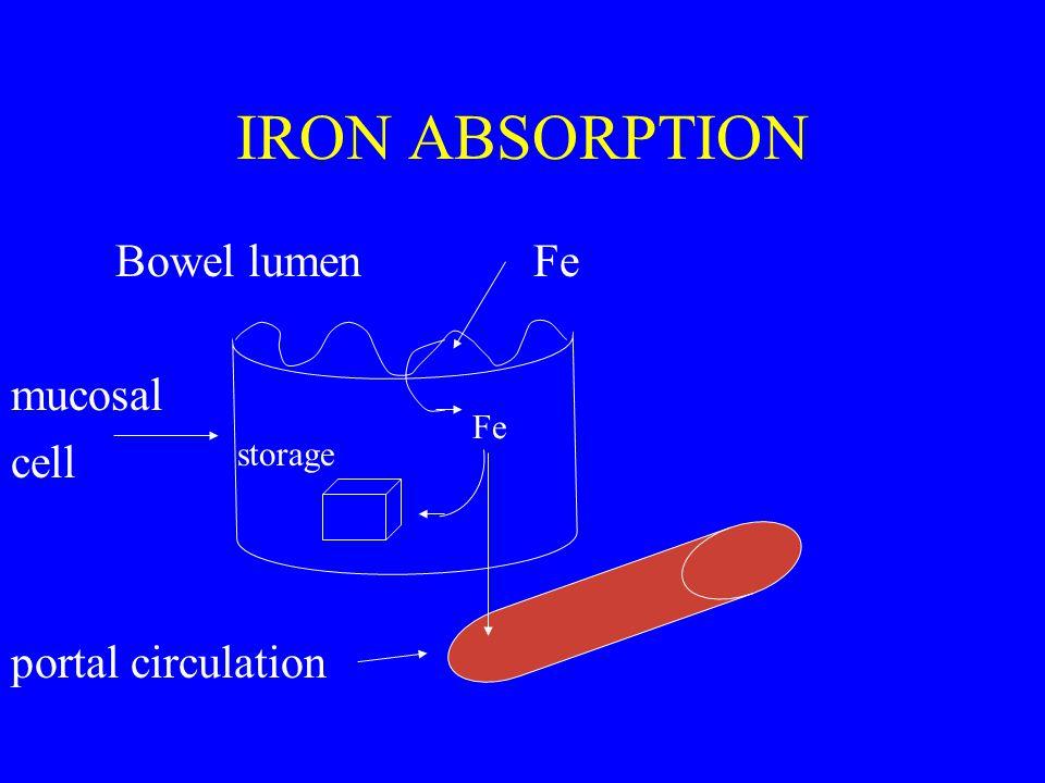 IRON ABSORPTION Bowel lumenFe mucosal cell portal circulation Fe storage