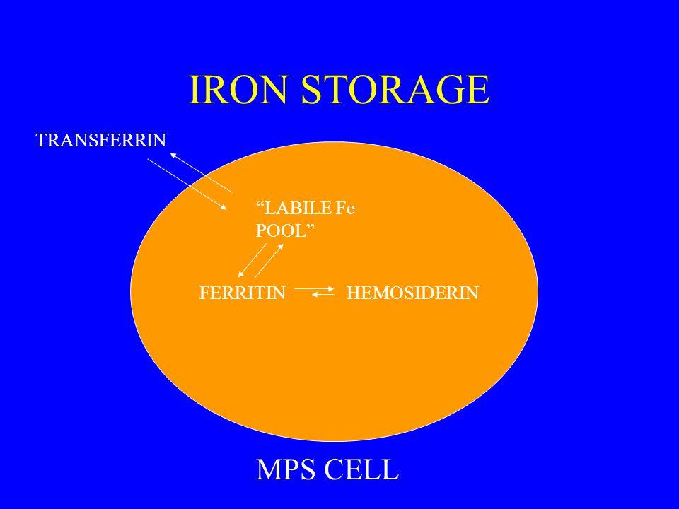 IRON STORAGE LABILE Fe POOL FERRITIN TRANSFERRIN HEMOSIDERIN MPS CELL