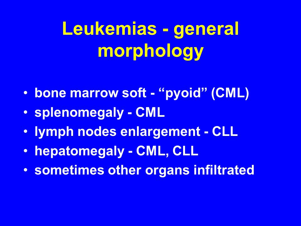 "Leukemias - general morphology bone marrow soft - ""pyoid"" (CML) splenomegaly - CML lymph nodes enlargement - CLL hepatomegaly - CML, CLL sometimes oth"