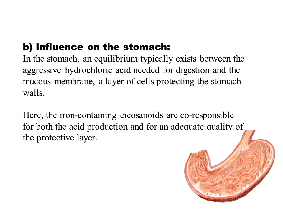 b) Influence on the stomach: In the stomach, an equilibrium typically exists between the aggressive hydrochloric acid needed for digestion and the mucous membrane, a layer of cells protecting the stomach walls.