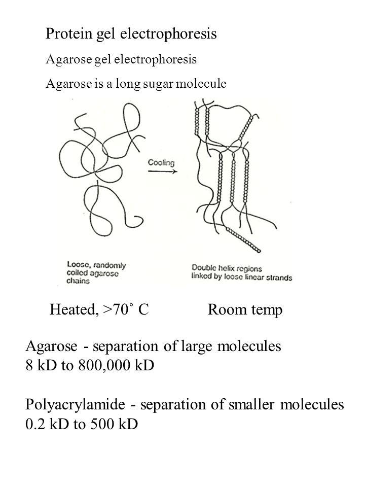 Protein gel electrophoresis Agarose gel electrophoresis Agarose is a long sugar molecule Room tempHeated, >70˚ C Agarose - separation of large molecul