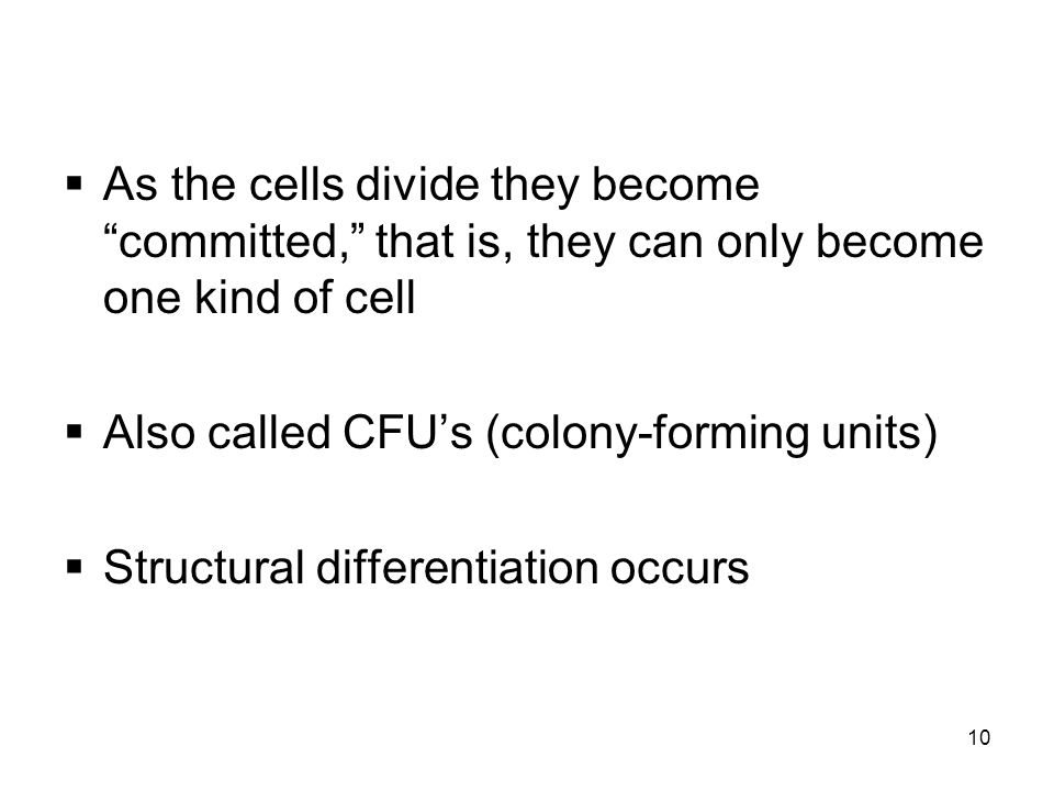 10  As the cells divide they become committed, that is, they can only become one kind of cell  Also called CFU's (colony-forming units)  Structural differentiation occurs