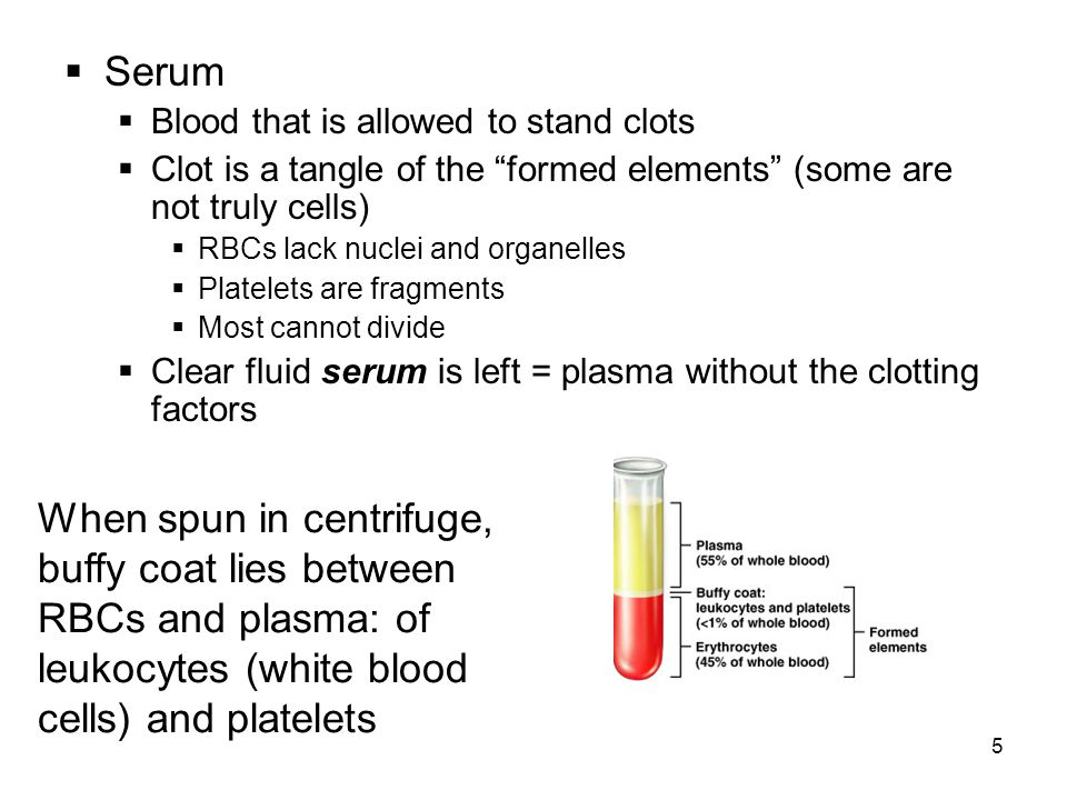 5  Serum  Blood that is allowed to stand clots  Clot is a tangle of the formed elements (some are not truly cells)  RBCs lack nuclei and organelles  Platelets are fragments  Most cannot divide  Clear fluid serum is left = plasma without the clotting factors When spun in centrifuge, buffy coat lies between RBCs and plasma: of leukocytes (white blood cells) and platelets