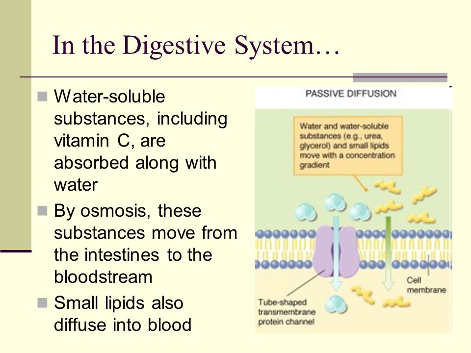 In the Digestive System… Water-soluble substances, including vitamin C, are absorbed along with water By osmosis, these substances move from the intestines to the bloodstream Small lipids also diffuse into blood