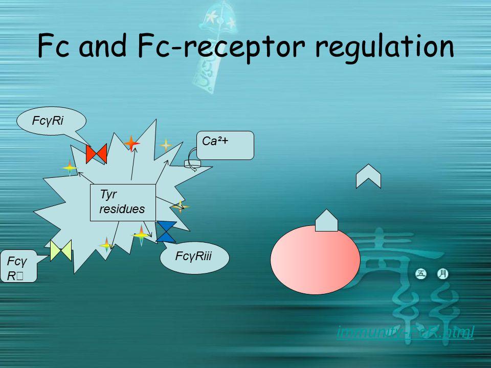 Fc and Fc-receptor regulation Ca²+ Fcγ R ⅱ Tyr residues FcγRi FcγRiii immunity-FcR.html