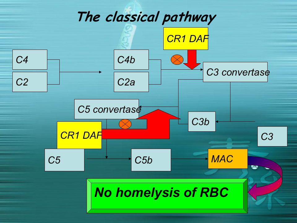 The classical pathway C3 C2 C4C4b C2a C3 convertase C3b C5 convertase C5C5b MAC CR1 DAF No homelysis of RBC