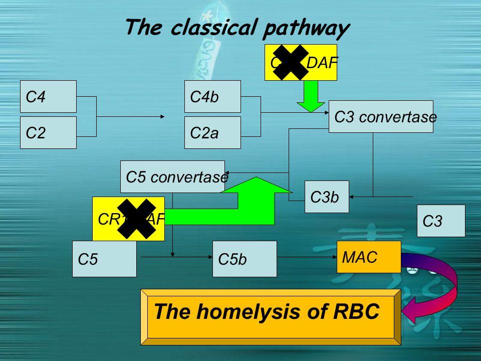 The classical pathway C3 C2 C4C4b C2a C3 convertase C3b C5 convertase C5C5b MAC CR1 DAF The homelysis of RBC