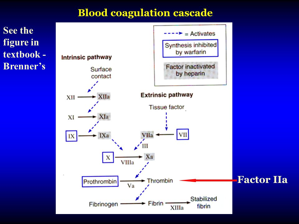 Factor IIa Blood coagulation cascade See the figure in textbook - Brenner's