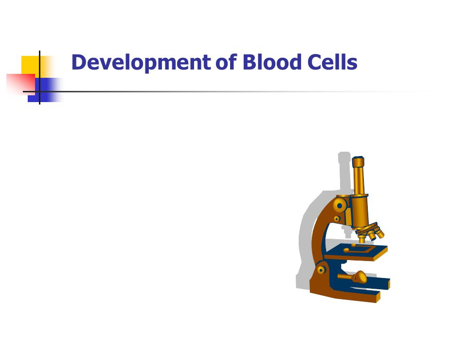 Development of Blood Cells