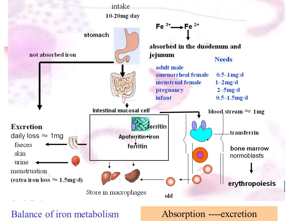 Figure 3 : Viral infection and iron metabolism : Nature Reviews ...