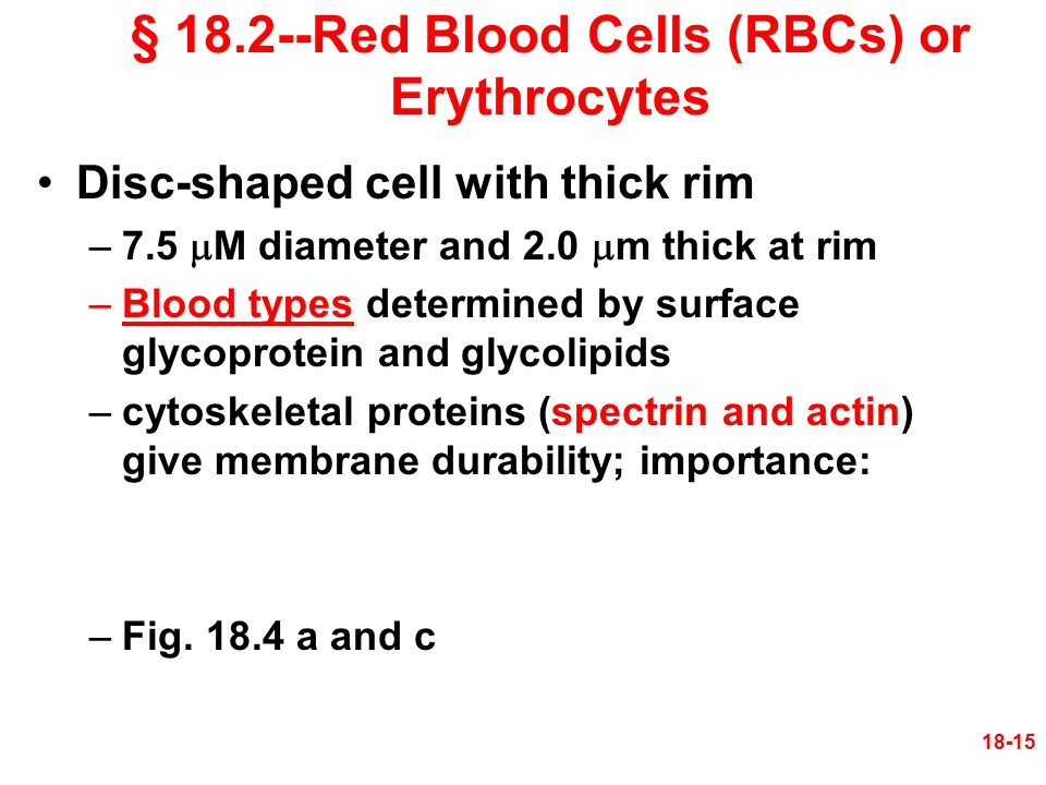 18-15 Disc-shaped cell with thick rim –7.5  M diameter and 2.0  m thick at rim –Blood types determined by surface glycoprotein and glycolipids –cyto