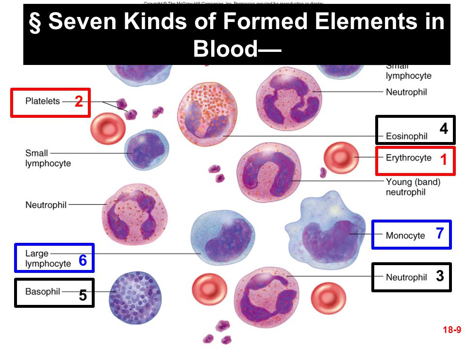 Formed Elements of Blood 18-10 1.Erythrocytes (RBCs) 2.Platelets 3.Leukocytes (WBCs) A.