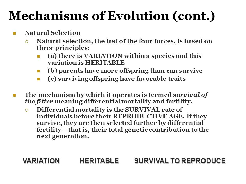 Mechanisms of Evolution (cont.) Natural Selection  Natural selection, the last of the four forces, is based on three principles: (a) there is VARIATI