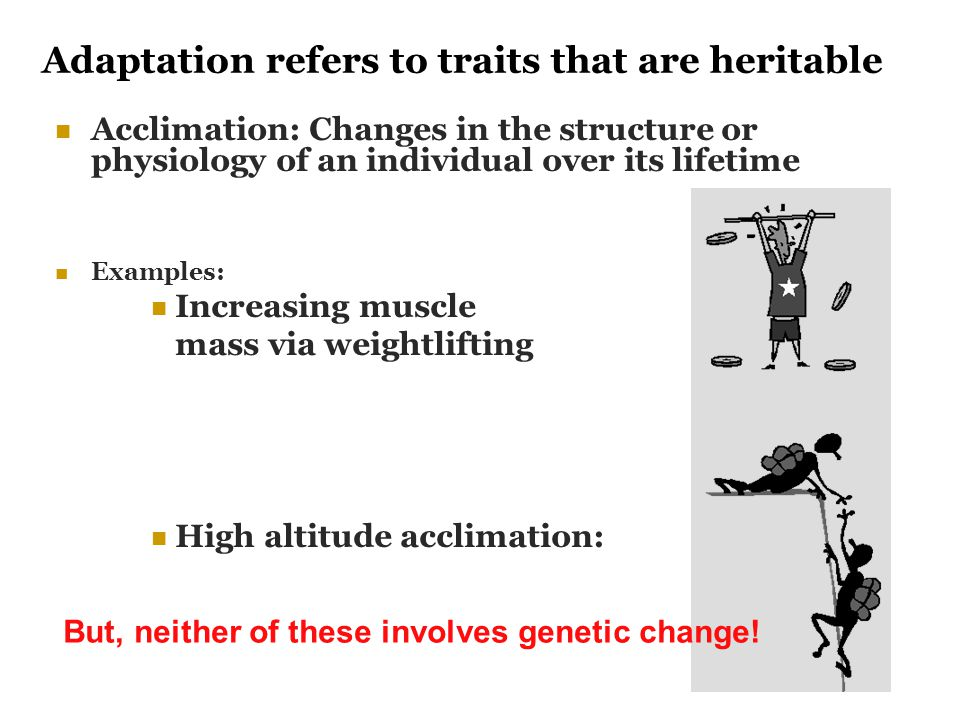 Adaptation refers to traits that are heritable Acclimation: Changes in the structure or physiology of an individual over its lifetime Examples: Increa