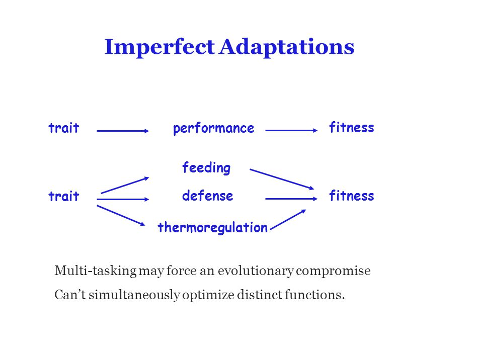 Imperfect Adaptations Multi-tasking may force an evolutionary compromise Can't simultaneously optimize distinct functions. traitperformance fitness tr