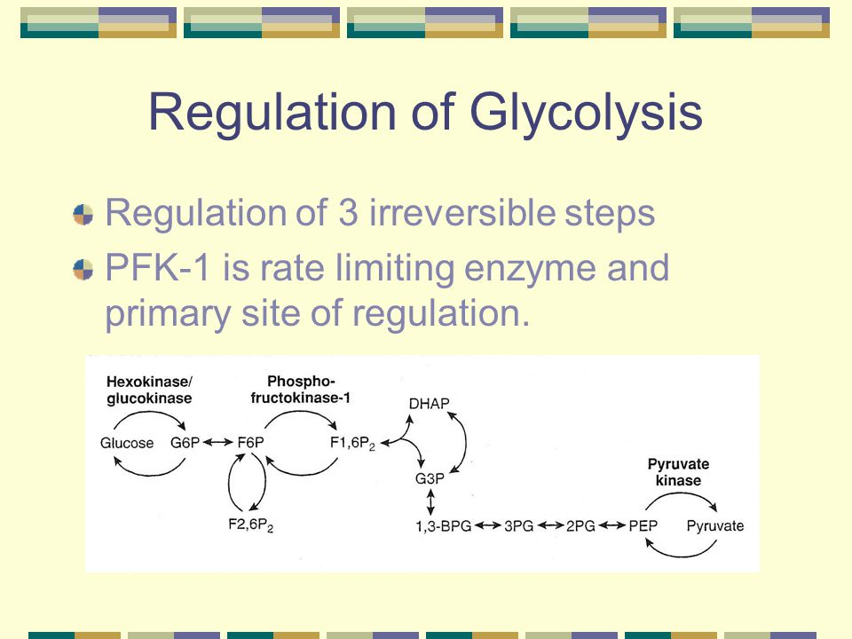 Regulation of Glycolysis Regulation of 3 irreversible steps PFK-1 is rate limiting enzyme and primary site of regulation.