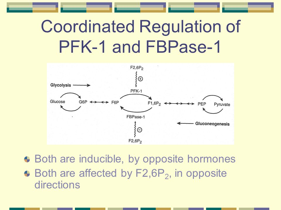 Coordinated Regulation of PFK-1 and FBPase-1 Both are inducible, by opposite hormones Both are affected by F2,6P 2, in opposite directions