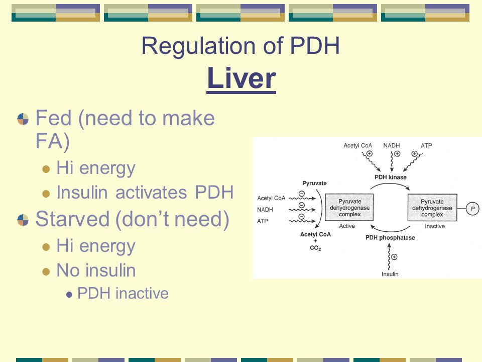 Regulation of PDH Liver Fed (need to make FA) Hi energy Insulin activates PDH Starved (don't need) Hi energy No insulin PDH inactive