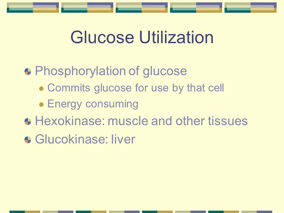 Glucose Utilization Phosphorylation of glucose Commits glucose for use by that cell Energy consuming Hexokinase: muscle and other tissues Glucokinase: liver