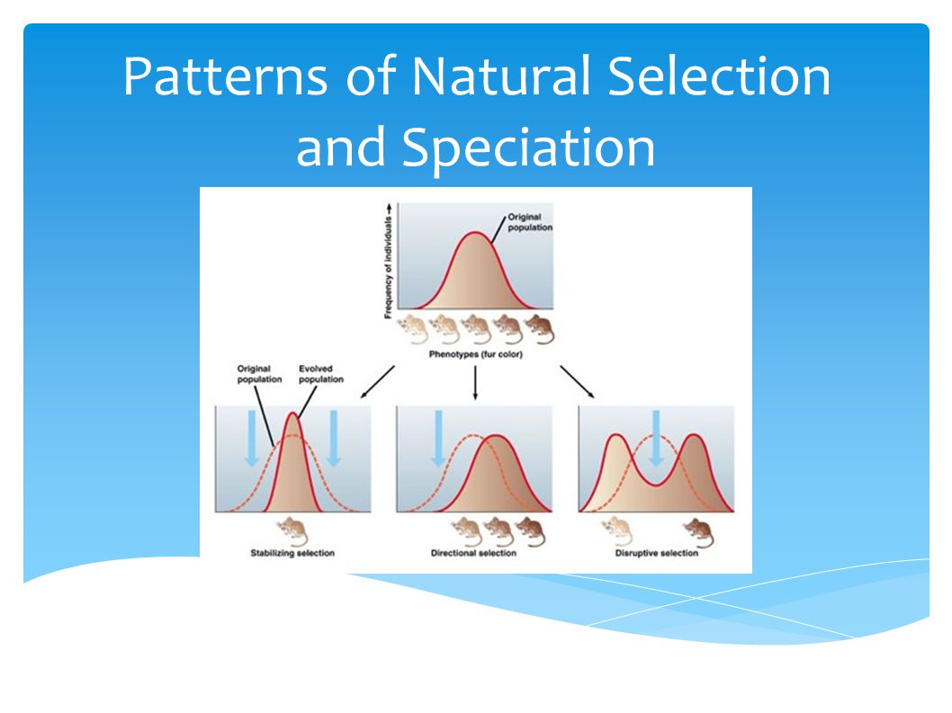 Patterns of Natural Selection and Speciation