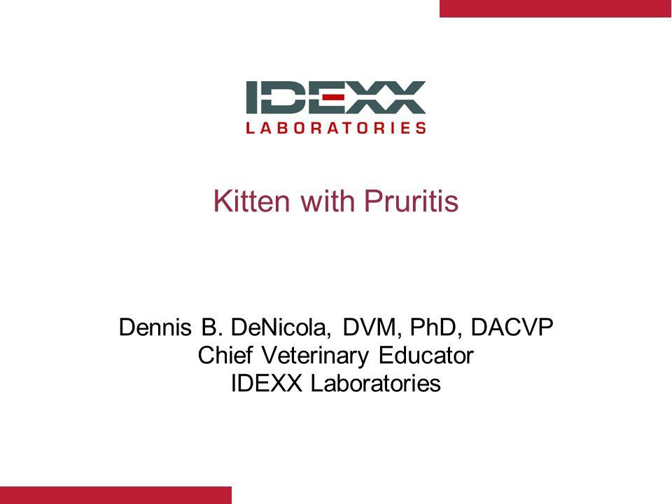 Kitten with Pruritis Dennis B.