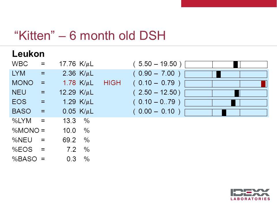 Kitten – 6 month old DSH Leukon WBC=17.76K/  L( 5.50 – 19.50 ) LYM=2