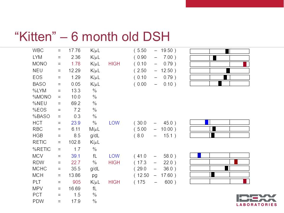 Kitten – 6 month old DSH Leukon WBC=17.76K/  L( 5.50 – 19.50 ) LYM=2.36K/  L( 0.90 – 7.00 ) MONO=1.78K/  LHIGH( 0.10 – 0.79 ) NEU=12.29K/  L( 2.50 – 12.50) EOS=1.29K/  L( 0.10 – 0..79 ) BASO=0.05K/  L( 0.00 – 0.10 ) %LYM=13.3% %MONO=10.0% %NEU=69.2% %EOS=7.2% %BASO=0.3% High normal leukocyte count Mild monocytosis Low normal lymphocytes in face of excitement !