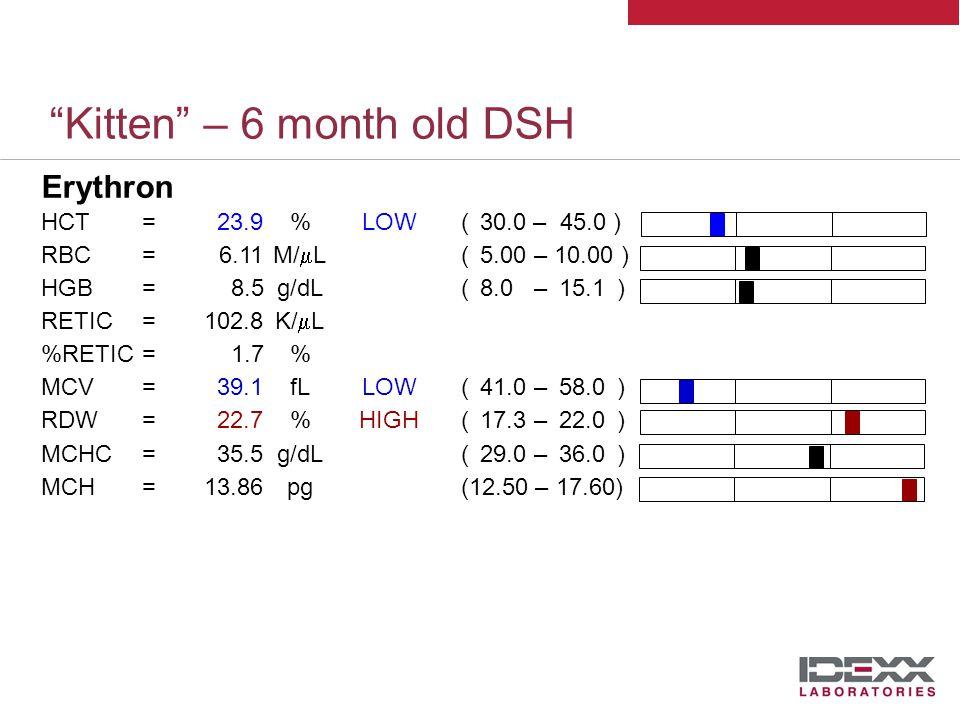 Kitten – 6 month old DSH Leukon WBC=17.76K/  L( 5.50 – 19.50 ) LYM=2.36K/  L( 0.90 – 7.00 ) MONO=1.78K/  LHIGH( 0.10 – 0.79 ) NEU=12.29K/  L( 2.50 – 12.50) EOS=1.29K/  L( 0.10 – 0..79 ) BASO=0.05K/  L( 0.00 – 0.10 ) %LYM=13.3% %MONO=10.0% %NEU=69.2% %EOS=7.2% %BASO=0.3% High normal leukocyte count Mild monocytosis Low normal lymphocytes in face of excitement .