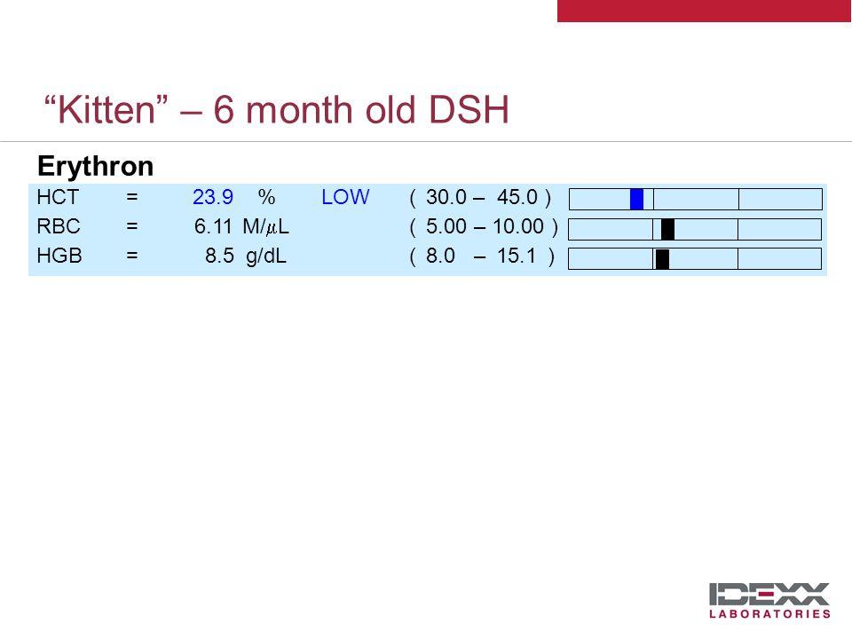 Kitten – 6 month old DSH WBC=17.76 K/  L(5.50 – 19.50) LYM=2.36 K/  L(0.90 – 7.00) MONO=1.78 K/  LHIGH(0.10 – 0.79) NEU=12.29 K/  L(2.50 – 12.50) EOS=1.29 K/  L(0.10 – 0.79) BASO=0.05 K/  L(0.00 – 0.10) %LYM=13.3% %MONO=10.0% %NEU=69.2% %EOS=7.2% %BASO=0.3% HCT=23.9%LOW(30.0– 45.0) RBC=6.11M/  L( 5.00 – 10.00 ) HGB=8.5g/dL( 8.0 – 15.1 ) RETIC=102.8K/  L %RETIC=1.7% MCV=39.1fLLOW ( 41.0 – 58.0 ) RDW=22.7%HIGH( 17.3 – 22.0) MCHC=35.5g/dL( 29.0 – 36.0 ) MCH=13.86pg(12.50 – 17.60) PLT=905 K/  LHIGH (175 – 600) MPV=16.69fL PCT=1.5% PDW=17.9%