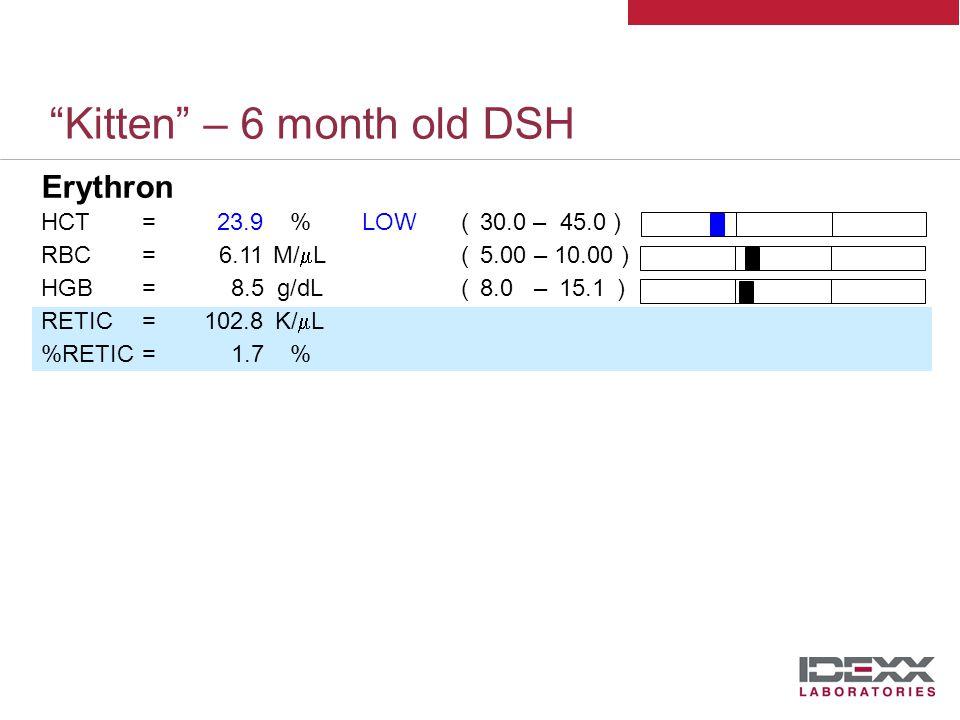 Kitten – 6 month old DSH Erythron HCT=23.9%LOW( 30.0 – 45.0 ) RBC=6.11M/  L( 5.00 – 10.00 ) HGB=8.5g/dL( 8.0 – 15.1 ) RETIC=102.8K/  L %RETIC=1.7% Anemia Mild, regenerative