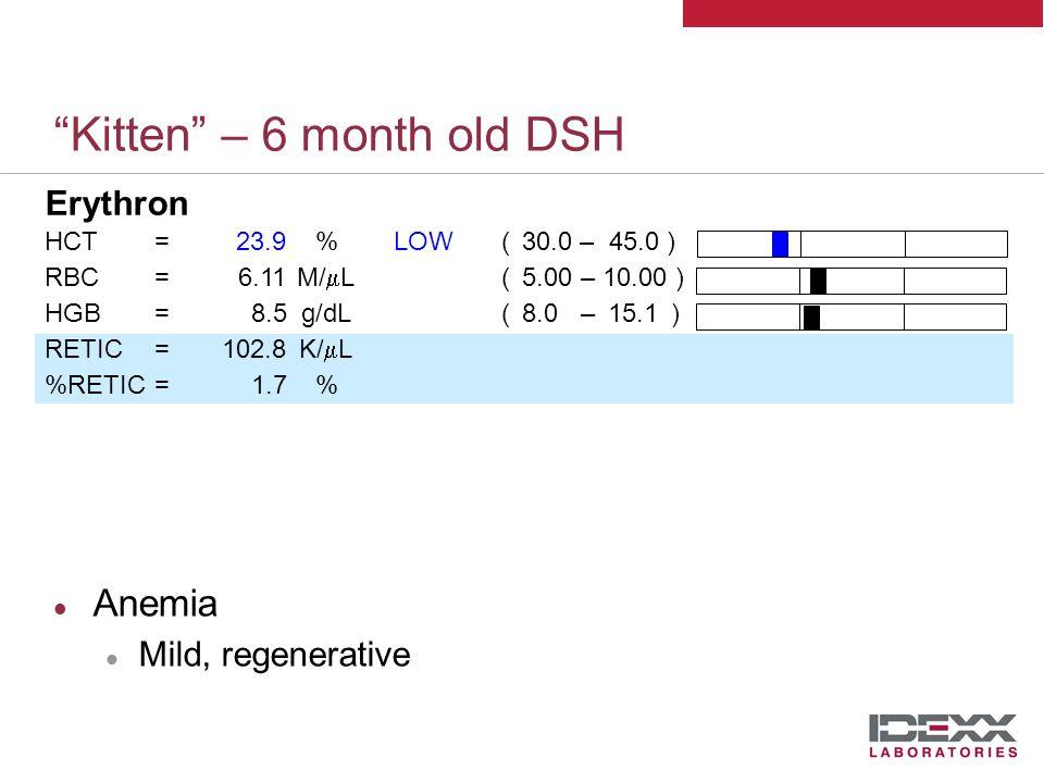 Kitten – 6 month old DSH Erythron HCT=23.9%LOW( 30.0 – 45.0 ) RBC=6.11M/  L( 5.00 – 10.00 ) HGB=8.5g/dL( 8.0 – 15.1 ) RETIC=102.8K/  L %RETIC=1.7% MCV=39.1fLLOW( 41.0 – 58.0 ) RDW=22.7%HIGH( 17.3 – 22.0) MCHC=35.5g/dL( 29.0 – 36.0 ) MCH=13.86pg(12.50 – 17.60)