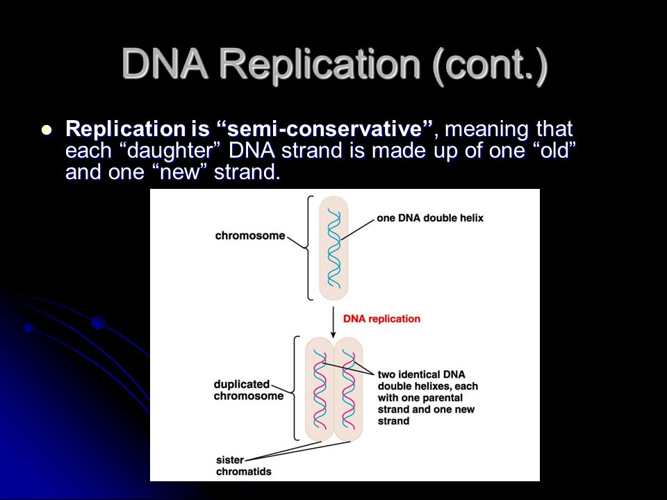 Replication is semi-conservative , meaning that each daughter DNA strand is made up of one old and one new strand.