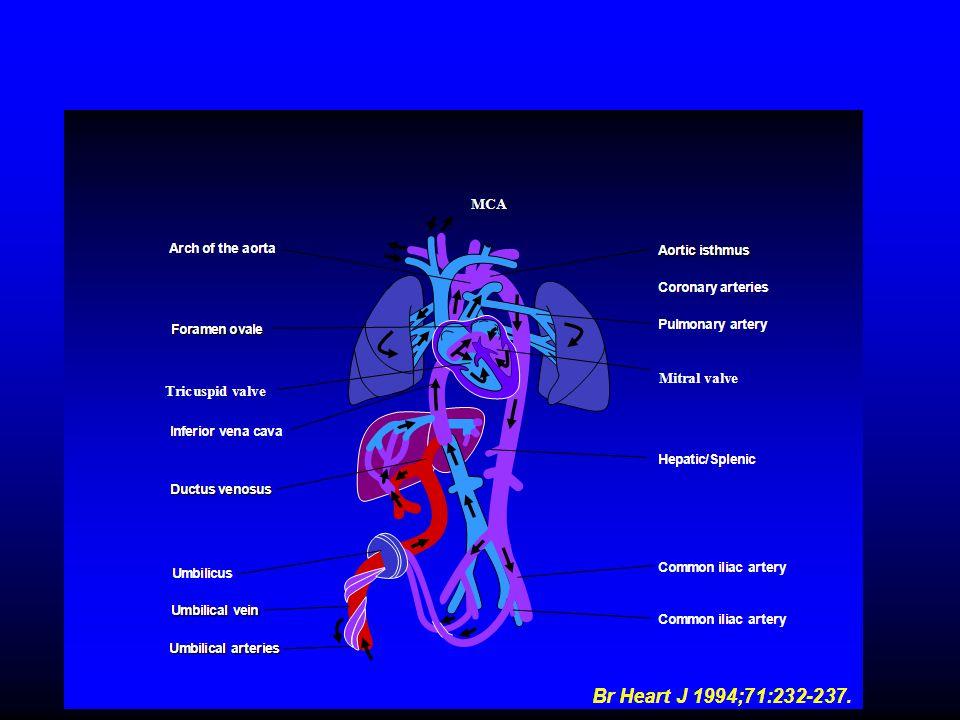 Abnormal Umbilical artery