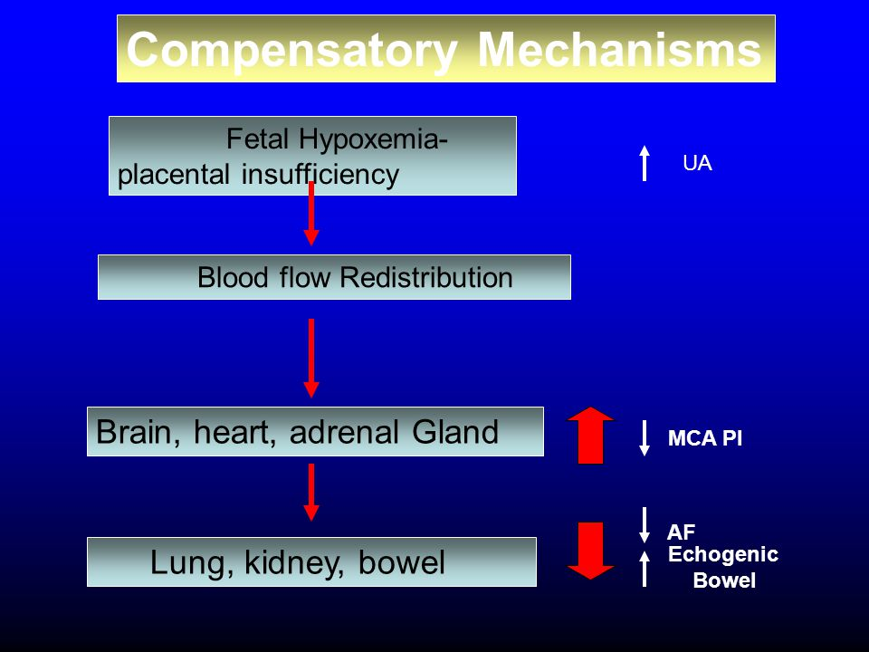 Compensatory Mechanisms MCA PI Echogenic Bowel AF Fetal Hypoxemia- placental insufficiency Blood flow Redistribution Brain, heart, adrenal Gland Lung,