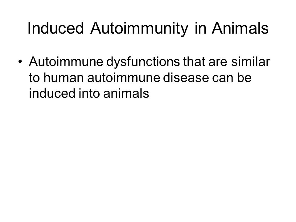 Induced Autoimmunity in Animals Autoimmune dysfunctions that are similar to human autoimmune disease can be induced into animals