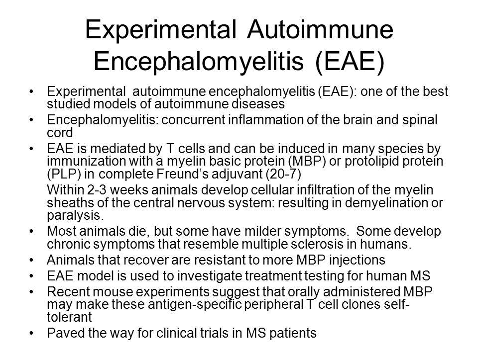 Experimental Autoimmune Encephalomyelitis (EAE) Experimental autoimmune encephalomyelitis (EAE): one of the best studied models of autoimmune diseases