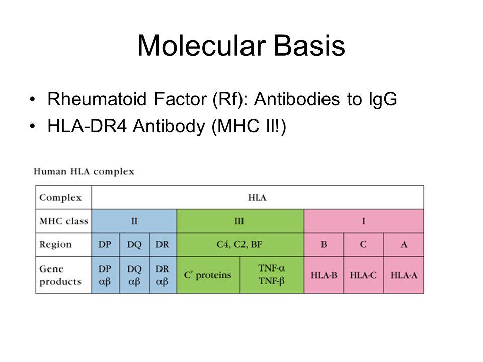 Molecular Basis Rheumatoid Factor (Rf): Antibodies to IgG HLA-DR4 Antibody (MHC II!)
