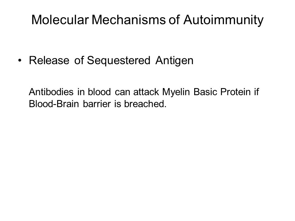 Molecular Mechanisms of Autoimmunity Release of Sequestered Antigen Antibodies in blood can attack Myelin Basic Protein if Blood-Brain barrier is brea