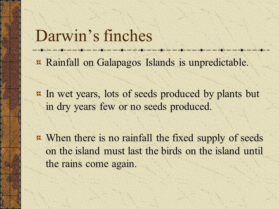 Darwin's finches Rainfall on Galapagos Islands is unpredictable. In wet years, lots of seeds produced by plants but in dry years few or no seeds produ