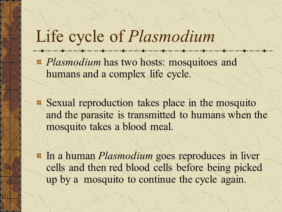 Life cycle of Plasmodium Plasmodium has two hosts: mosquitoes and humans and a complex life cycle. Sexual reproduction takes place in the mosquito and