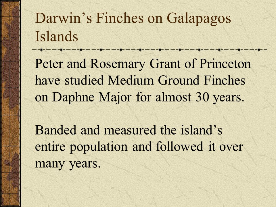 Darwin's Finches on Galapagos Islands Peter and Rosemary Grant of Princeton have studied Medium Ground Finches on Daphne Major for almost 30 years. Ba