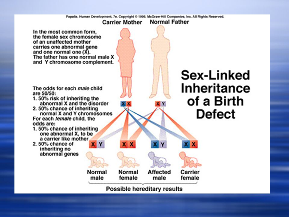 Sex Linked Inheritance FemaleParent XnXd Male XXXn Female Free XXd Female Carrier Parent Y XnY Male Free XdY Male Expresses