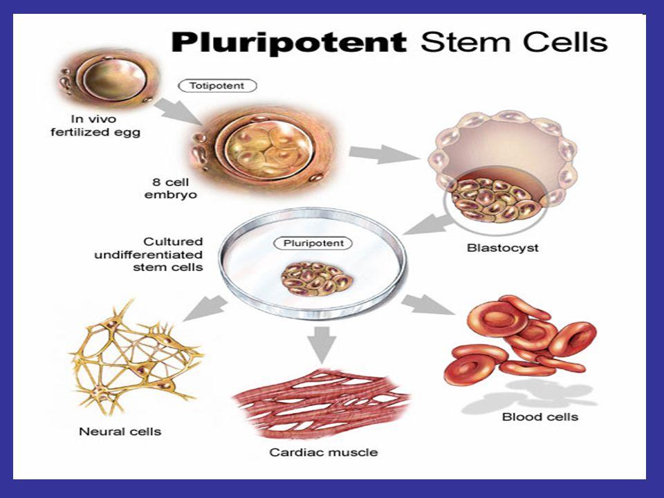 Macrocytic: RPI >= 2 Hemolytic Anemia Coombs' (DAT) Positive Immune Hemolysis Drug related Hemolysis Transfusion, Infection, Cancer Negative Hemoglobinopathy, G6PD, PK, Spherocytosis, Eliptocytosis, PNH, TTP, DIC