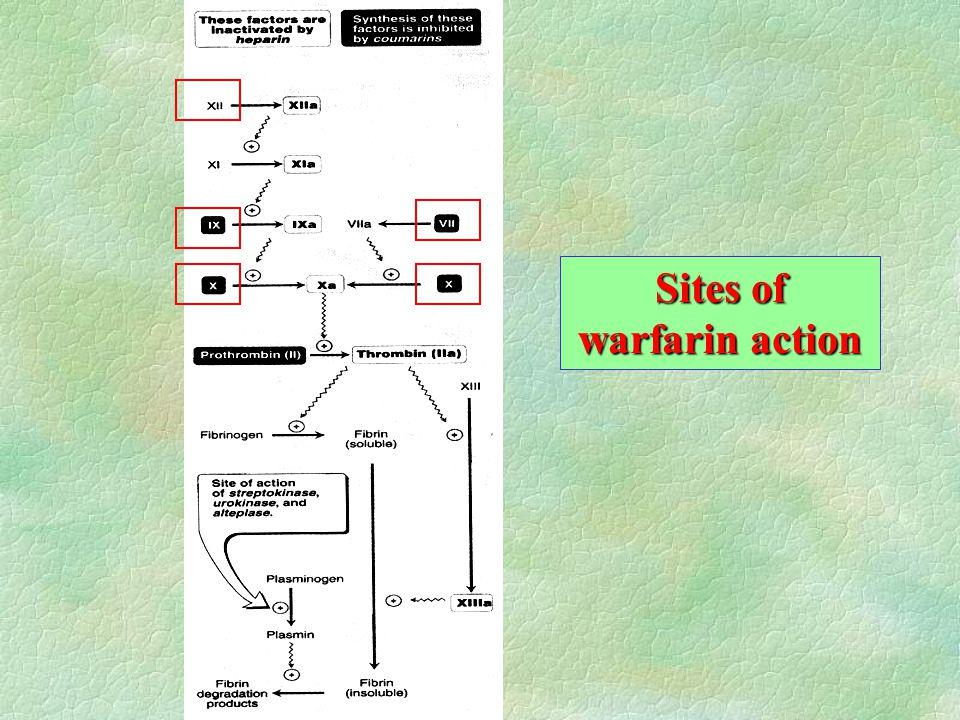 Sites of warfarin action