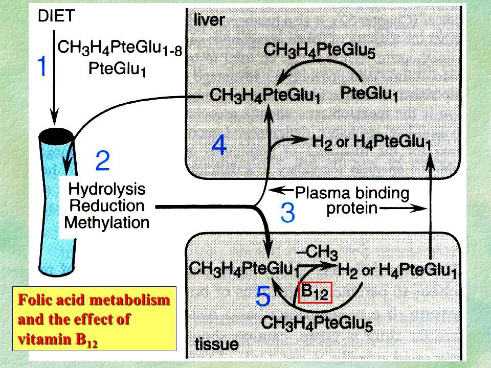 Folic acid metabolism and the effect of vitamin B 12