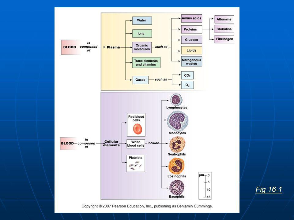 Steps of Hemostasis Vessel damage exposes collagen fibers Platelets adhere to collagen & release factors local vasoconstriction& platelet aggregation decreased blood flow platelet plug formation + feedback loop Fig 16-10, 11