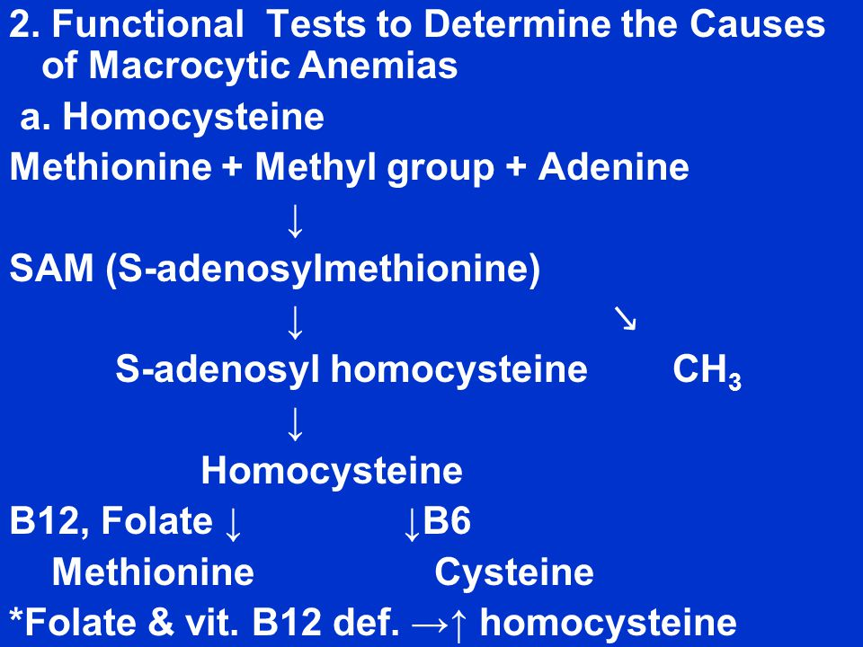 2. Functional Tests to Determine the Causes of Macrocytic Anemias a.